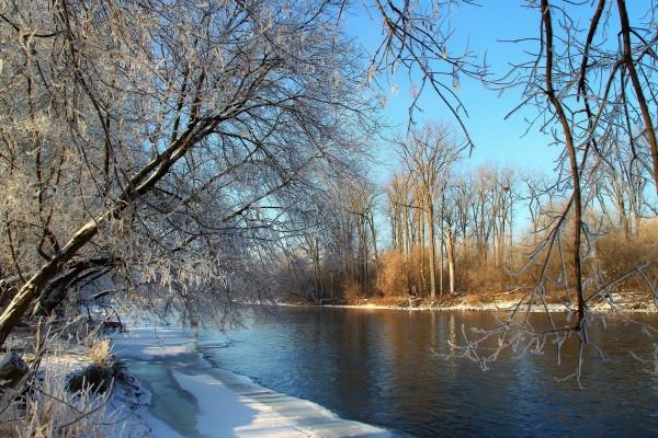 Río y árboles en invierno