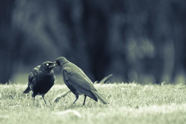 Amor entre dos pájaros