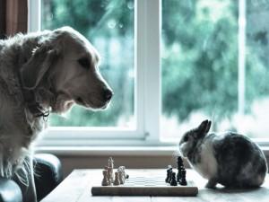 Un perro y un conejo jugando al ajedrez
