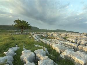 Piedras en el campo
