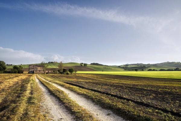 Camino hacia una casa de campo