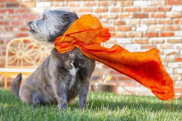 Un perrito con una bufanda naranja