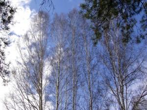 Postal: Árboles y un cielo azul
