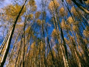 Árboles altos vistos en otoño