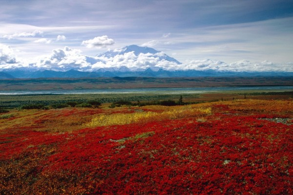 Parque nacional y reserva Denali, Alaska