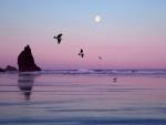 La luna y gaviotas en el cielo al caer la noche