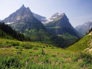 Pradera verde y montañas
