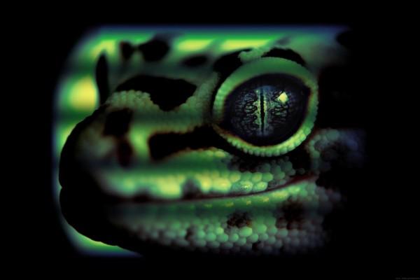 Cabeza de lagarto