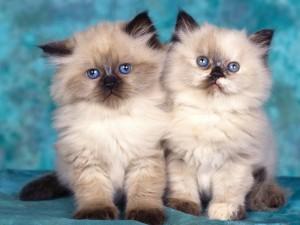 Postal: Hermanos con los ojos azules