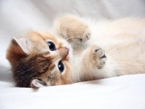 Postal: Un gatito mimoso