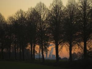 Postal: Árboles en línea