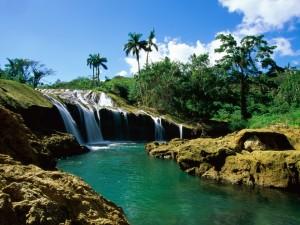 Postal: Cascada, árboles y palmeras
