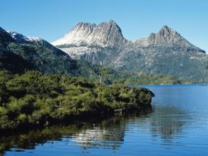 Vegetación en el lago