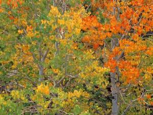 Postal: Inicio del otoño