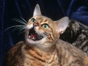 Postal: Gato a la defensiva