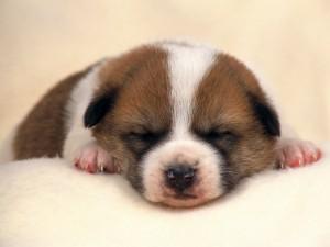 Postal: Cachorro dormido