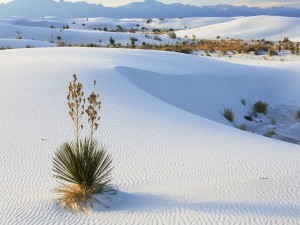Postal: Desierto de arenas blancas