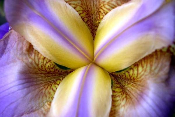 Pétalos de una orquídea