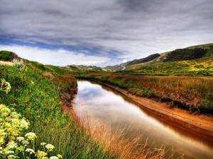 Postal: Flores junto al río