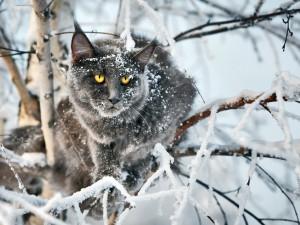 Postal: Gato entre las ramas nevadas