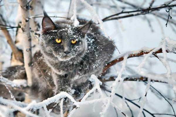 Gato entre las ramas nevadas
