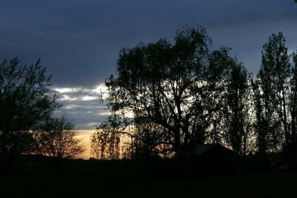Árboles en la oscuridad de la noche