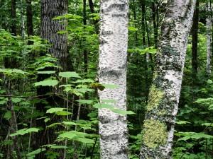 Troncos y hojas verdes