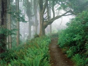 Postal: Camino hacia la niebla