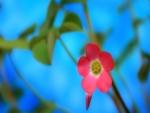 Florecilla rosa