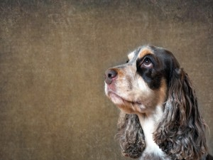 Postal: Perrito con largas orejas