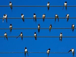 Postal: Pájaros sobre los cables