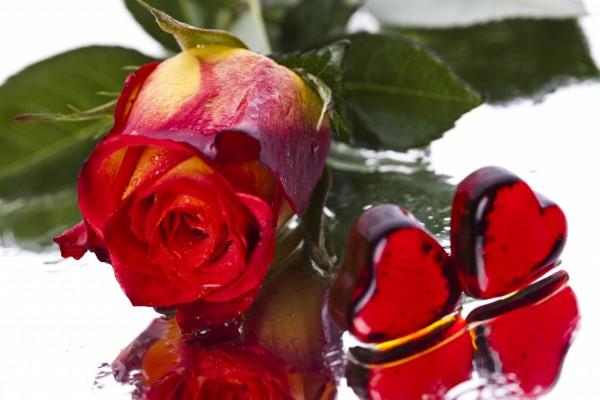 Rosa roja y dos corazones