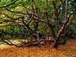 Hojas otoñales bajo el árbol