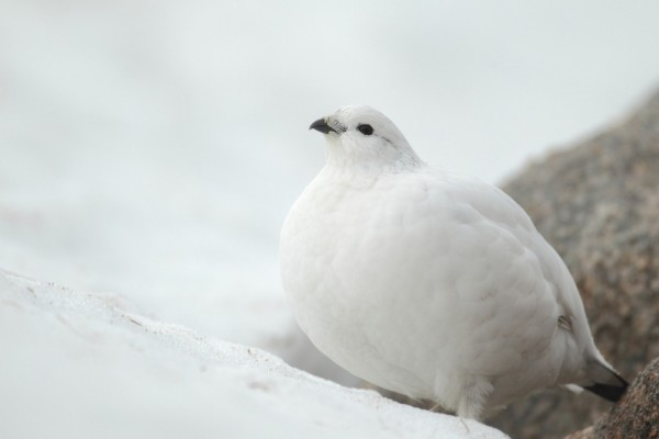 Pájaro en la nieve