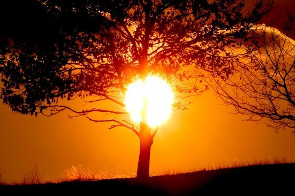 Un árbol y el sol