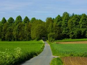 Carretera hacia los árboles
