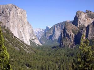 Postal: Pinos en las montañas