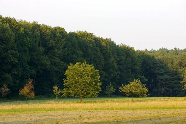 Pequeños árboles en la pradera