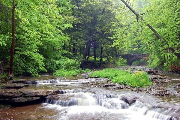 Río rodeado de árboles