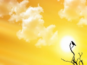 Postal: Pájaro y un cielo amarillo