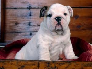 Perro en una caja de madera
