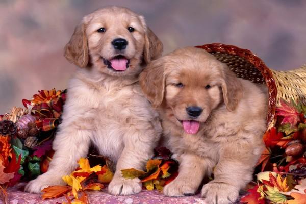 Dos perros muy simpáticos