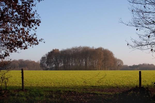 Árboles sin hojas en la pradera
