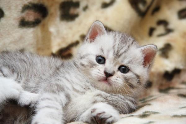 Gatito relajado