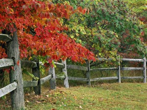 Postal: Árboles junto a la valla de madera