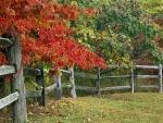 Árboles junto a la valla de madera