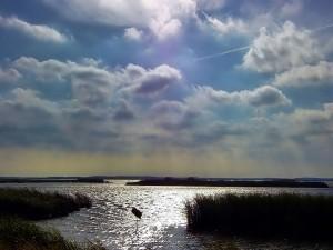 Brillos de luz en el agua