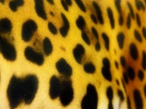 Postal: Manchas de jaguar