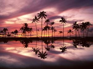 Postal: El reflejo de las palmeras