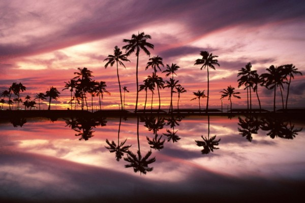 El reflejo de las palmeras